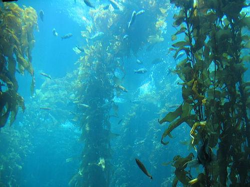 Propiedades de las algas marinas | Línea y Forma